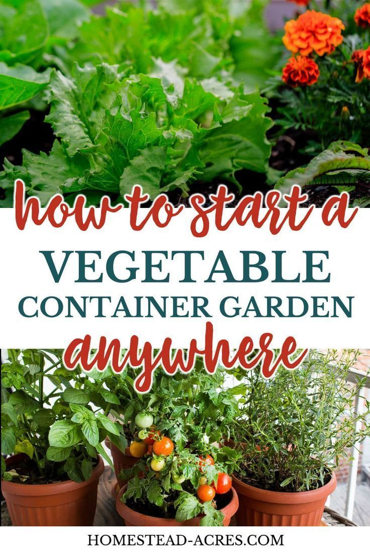 Photo of Vegetable Container Gardening For Beginners