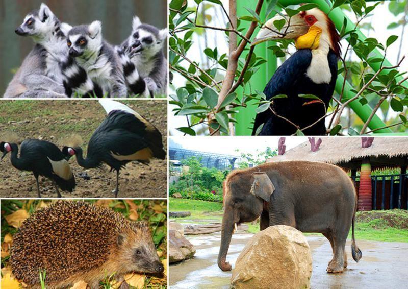 Jakarta Macam Hewan Di Ragunan Kebun Binatang Ragunan Kebun Binatang