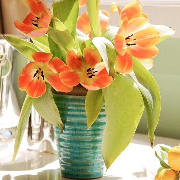 Um dia ensolarado inspira a enchermos nossa casa com flores, aqui o cachepot em cerâmica turquesa, um carinho que faz a diferença. #receberbem #temqueter #vocemerece #sol #flores #listadecasamento #vaso #cachepot #turquesaelaranja #alegria #bemestar. www.taniabulhoes.com.br