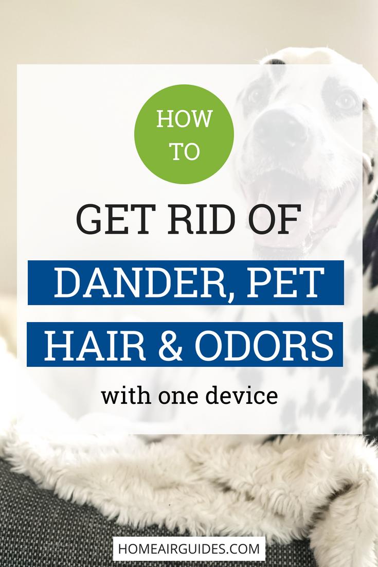 Best Air Purifier for Pets (Allergies, Dander, Hair