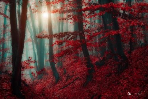 Mystical Forest, Pest, Hungary