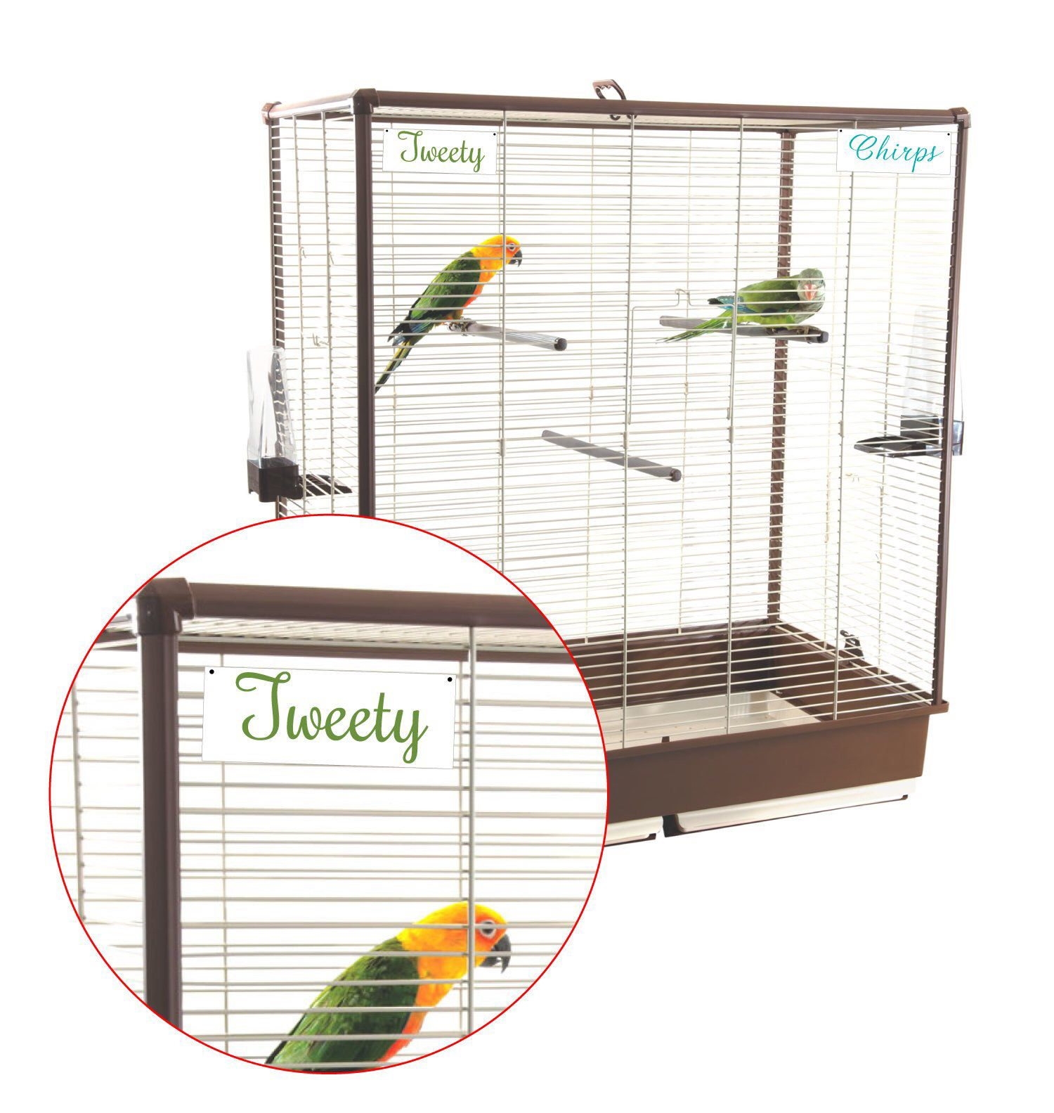 How To Get A Lovebird Back In Its Cage