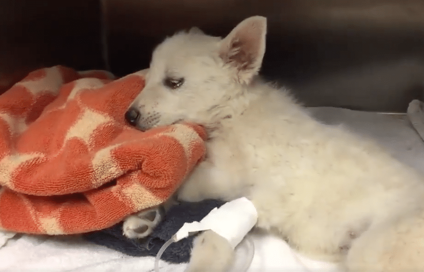 Sign Justice For Puppy In Coma After His Skull Was Bashed In Puppies Post Animal Cute Animal Pictures