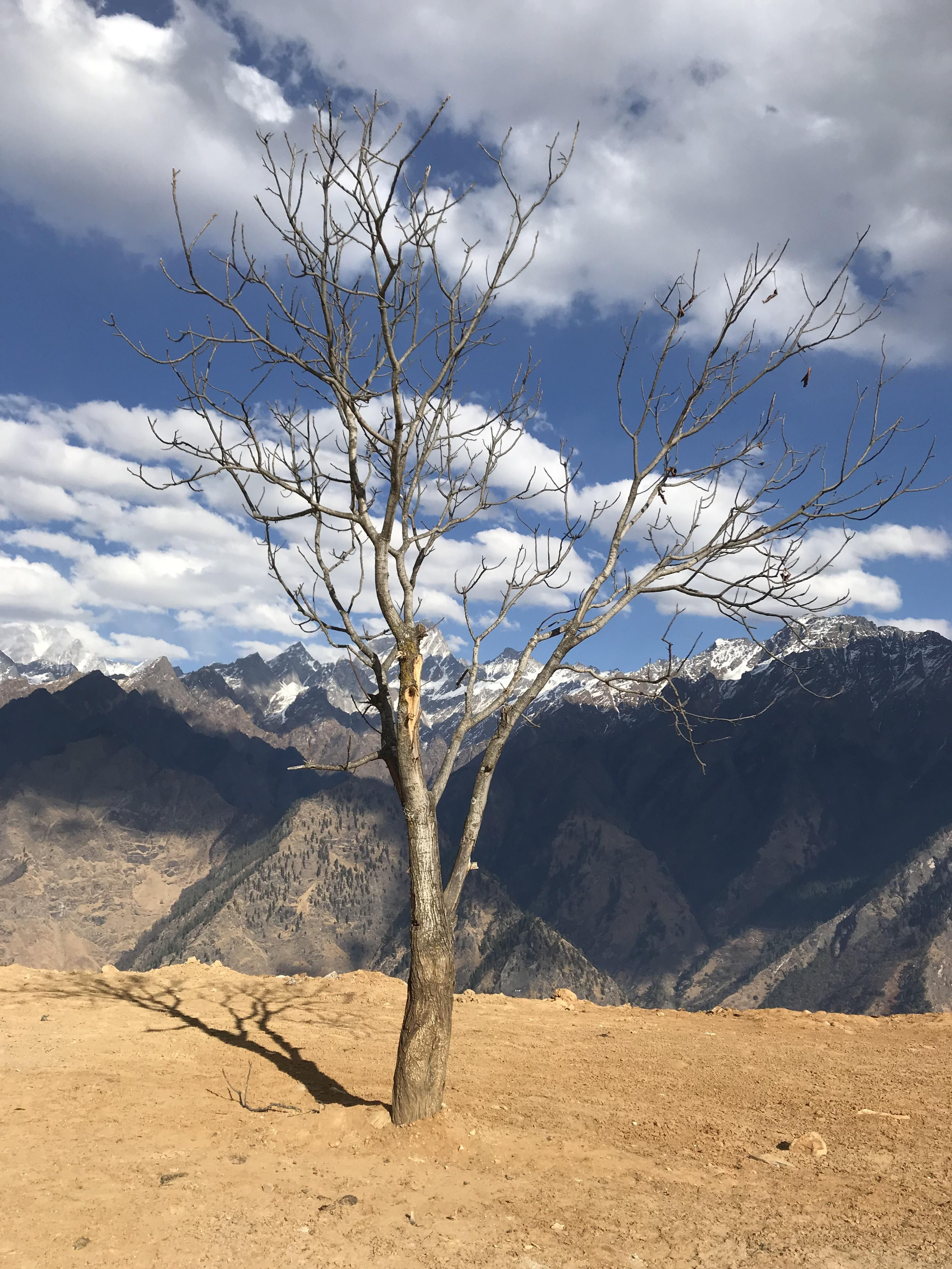 Barren lands, dead trees and blue skies. Nature's beauty is always  overwhelming [3024 x 4032] #nature and Science