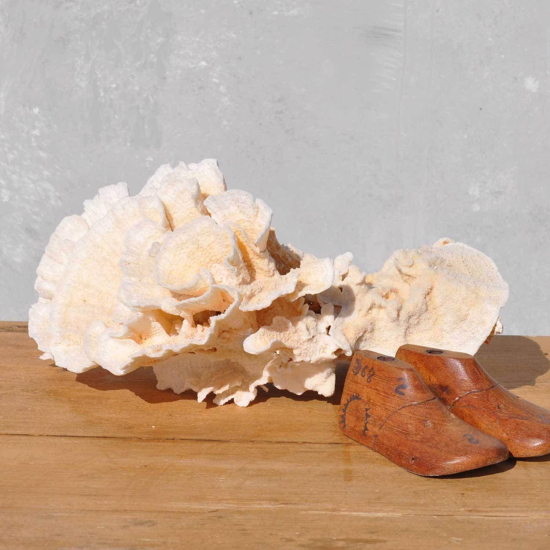 Vintage Marine Coral Specimen - Nautical Type 1 Petal