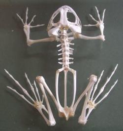 esqueletos animales  Buscar con Google  esqueletos en el closet
