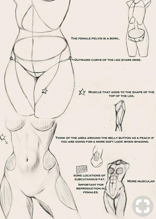 Pin by frank yost on cartoon anatomy | Pinterest | Anatomy, Drawings ...