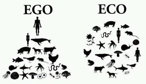 Výsledek obrázku pro eko ego
