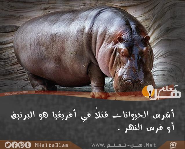 معلومات عامة عن الحيوانات هل تعلم Animal Facts Animals Facts