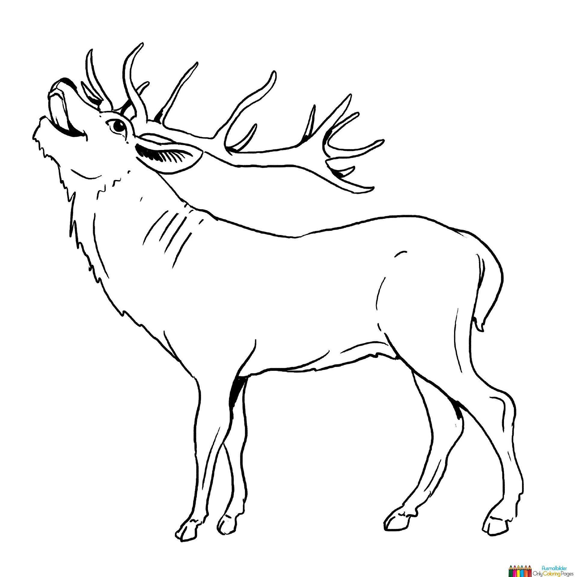 Hirsch Malvorlagen Ausmalbilder Tiere Malvorlagen Malvorlagen Tiere