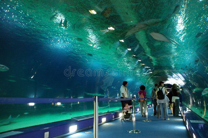 Underwater World Underwater tunnel LOceanographic Science Centre Valencia S