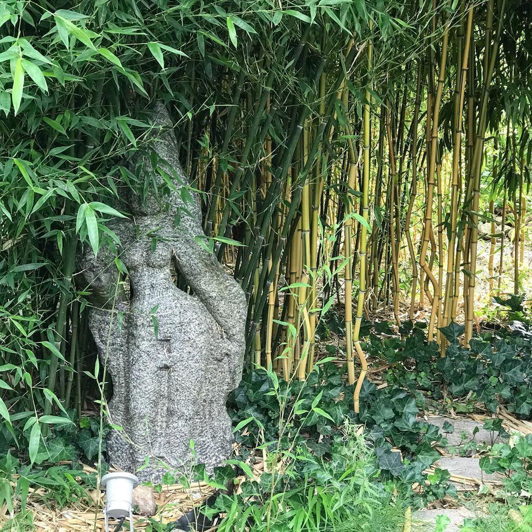 Augenpflege Bamboo Garden Garten Gartengestaltung Bambus