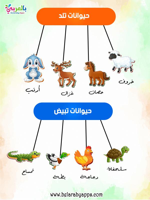 افكار شرح وحدة الحيوانات رياض اطفال حيواناتي المفضلة بالعربي نتعلم In 2021 Baby Mobile Baby