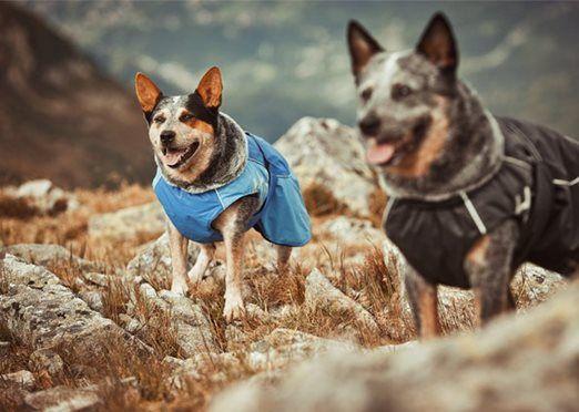 Top Dog Direct Co Nz Hurtta Winter Jacket Dog Coats Pets Dogs