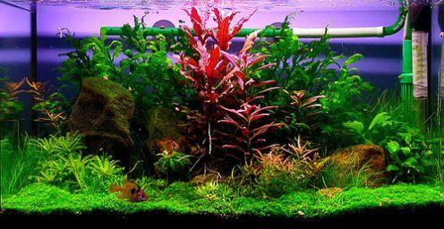 1000+ Images About Fish Tanks On Pinterest | Sorority, Carnivorous