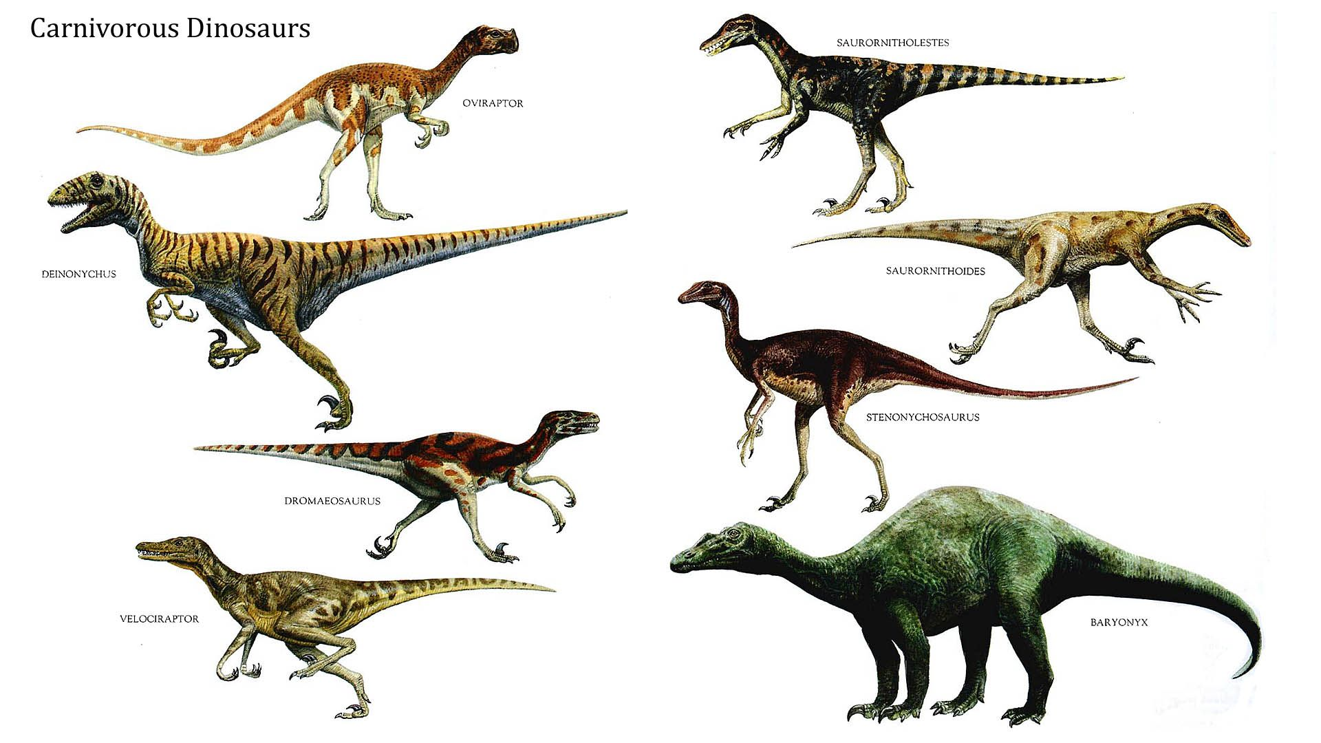 Dinosaurs Images Carnivorous Dinosaurs Hd Wallpaper And Background Photos 39775254 Prehistoric Animals Dinosaur Images Prehistoric Creatures