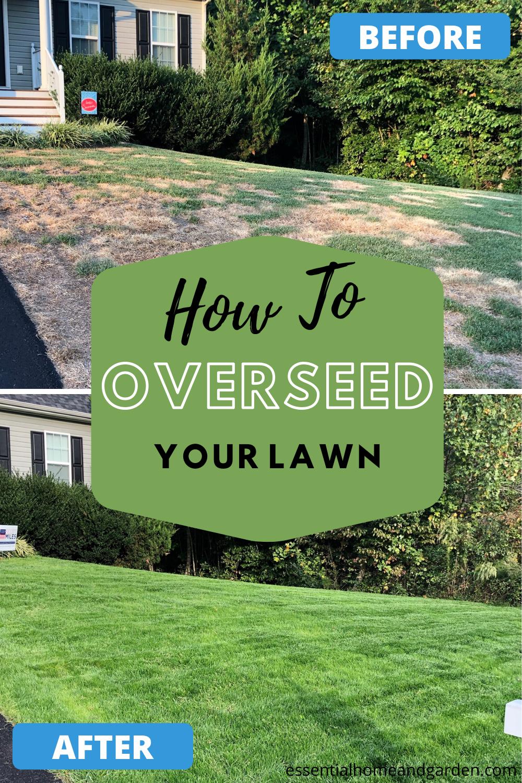 19++ When to cut grass after overseeding ideas
