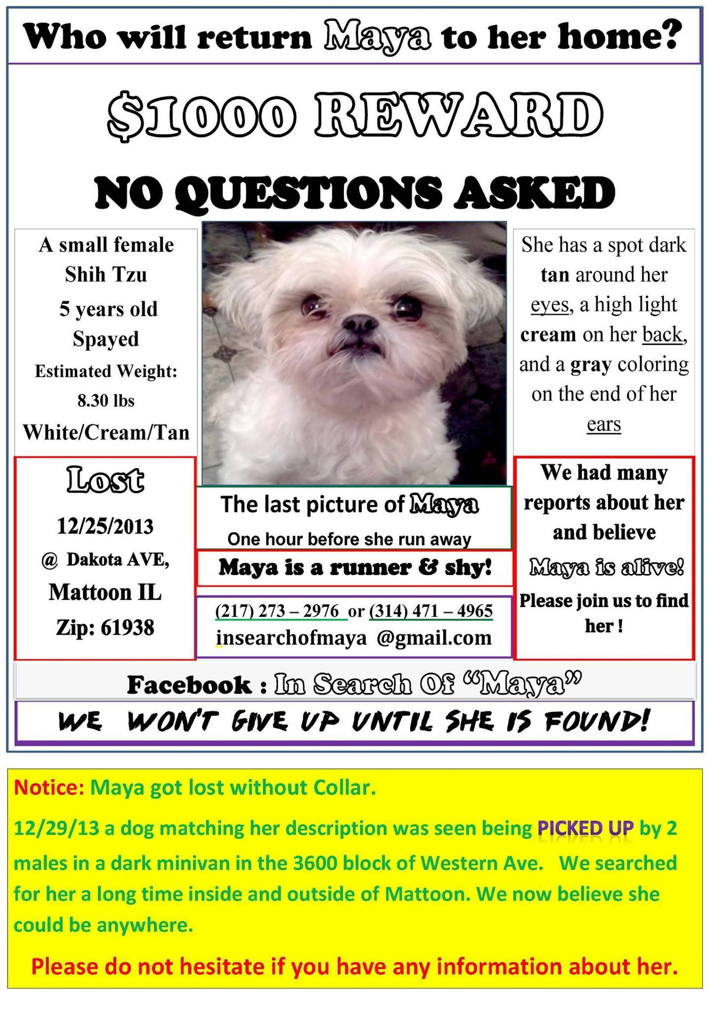 Maya Is Still Missing In Mattoon Il Losing A Dog This Or That