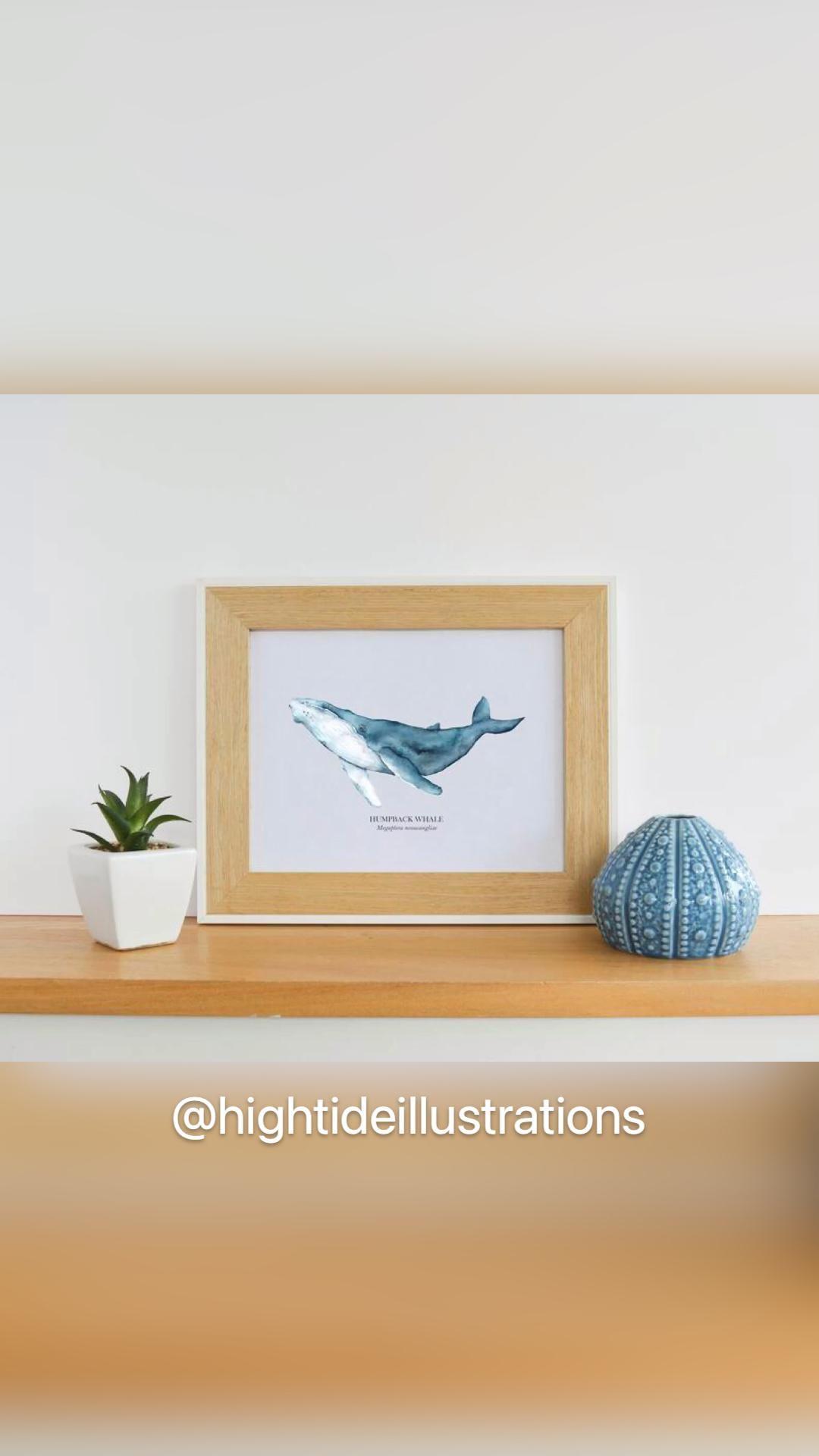 @hightideillustrations