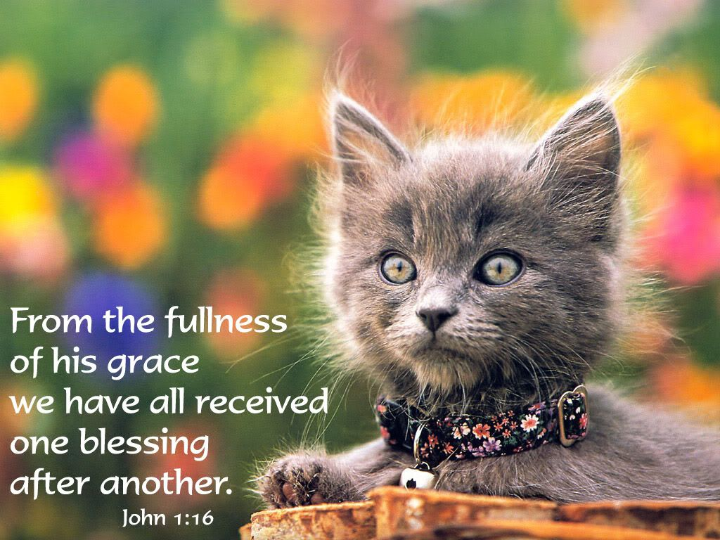 Cats Mentioned In The Bible Guide Pets News And Review
