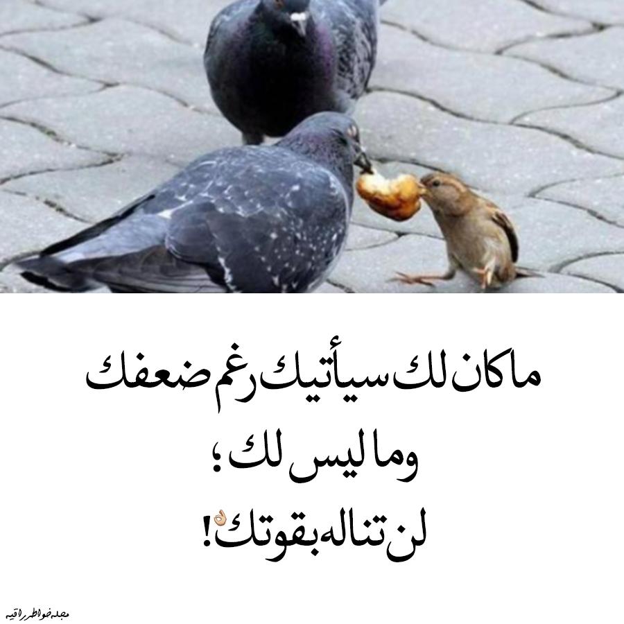 ماكان لك سيأتيك رغم ضعفك Cute Baby Girl Pictures Islamic Pictures Arabic Quotes