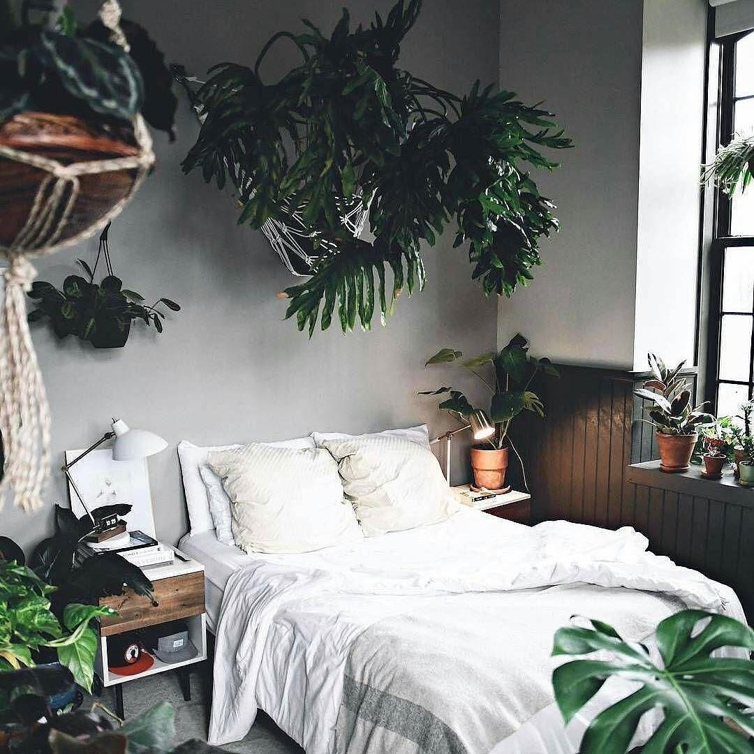 Non mettere le piante in camera da letto che ti rubano l ...