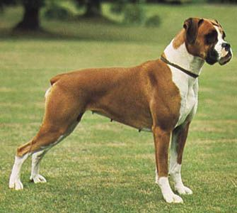 Pin By Mark On World Heritage 1760 Industrial Revolution Boxer Puppies Dog Training Aggression Best Dog Training Books