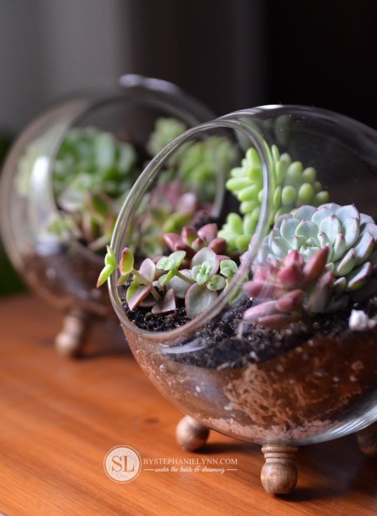 How To Make A Glass Globe Terrarium Gardening Terrarium Diy