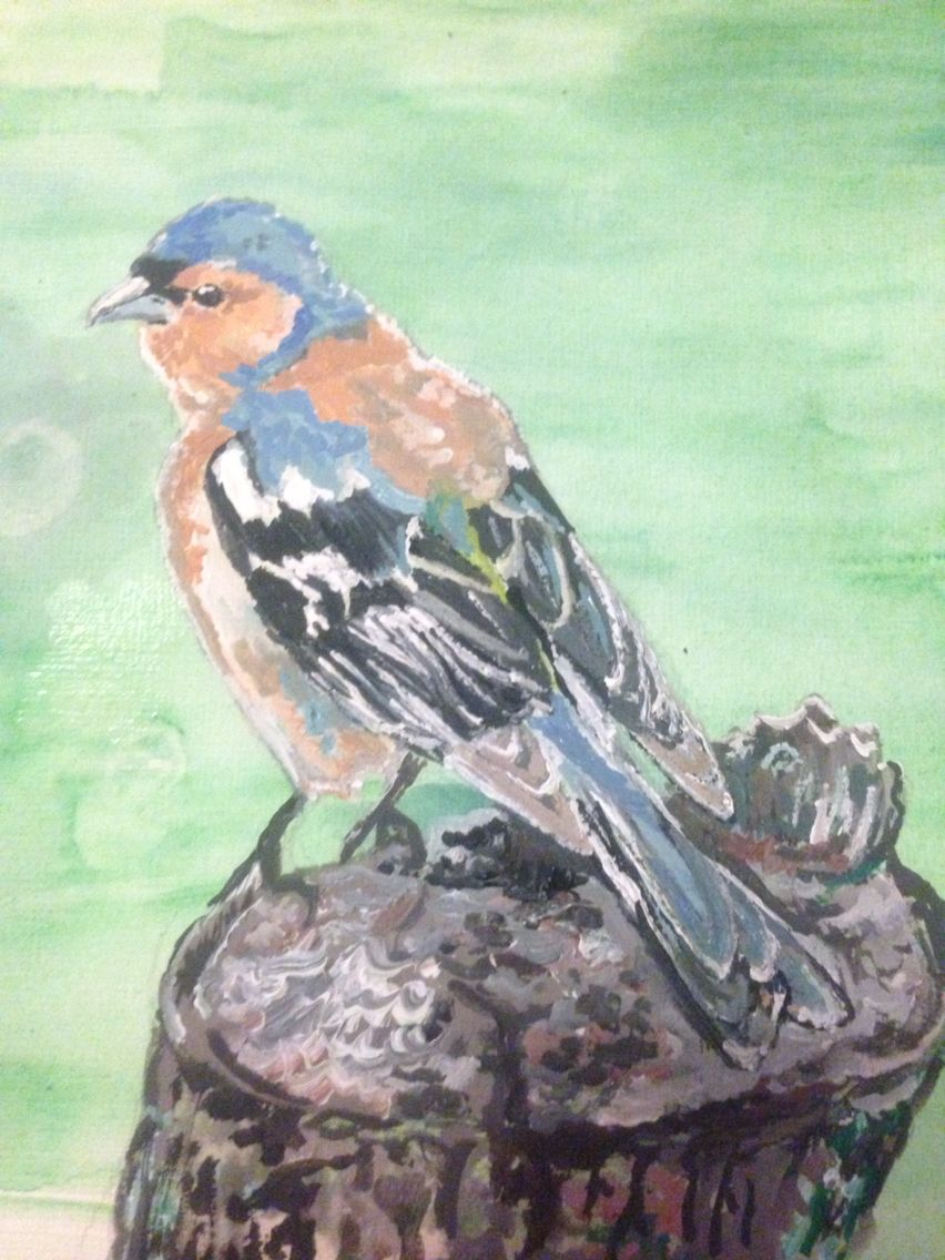 Chaffinch painted in gouache