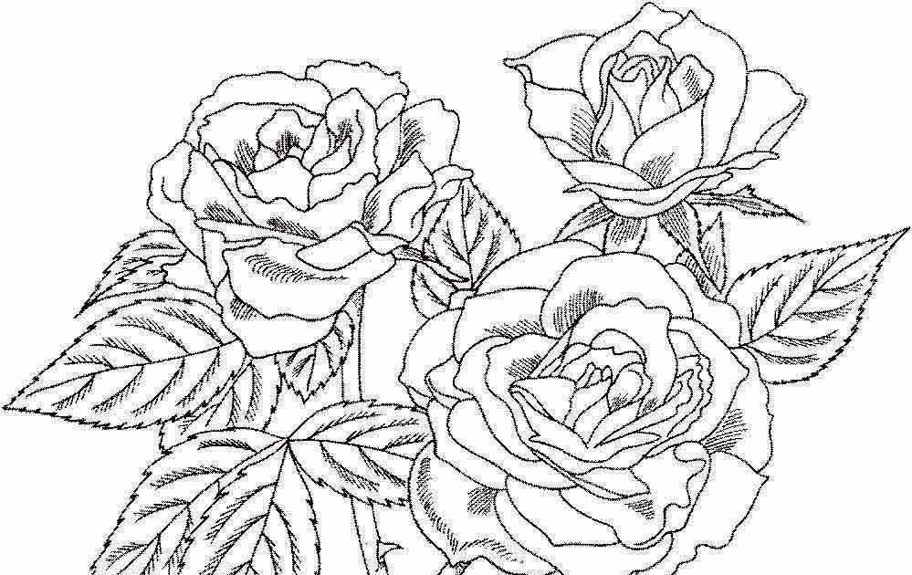 Contoh Gambar Sketsa Bunga Ragam Hias Flora Mawar