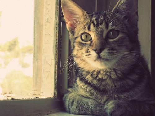 Resultado de imagen para gato tumblr
