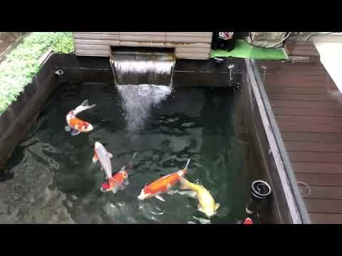 Amazing Pools And Water Features Kimball Starr Interior Design In 2021 Fish Pond Gardens Garden Pond Design Ponds Backyard