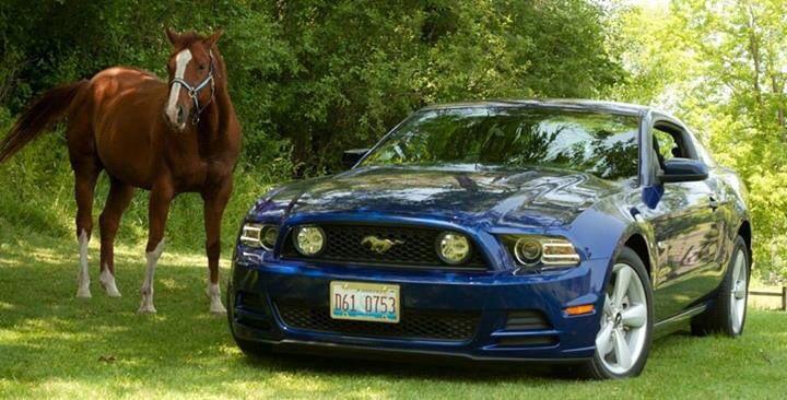 Mustang meet Mustang