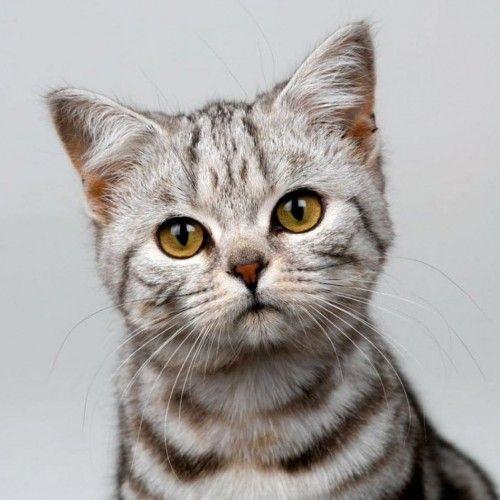 Cute Cat Best Cat Breeds Orange Tabby Cats Tabby Cat