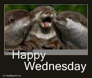 Half Way Through The Week Have A Great Wednesday Funny Morning Memes Good Morning Quotes Happy Wednesday
