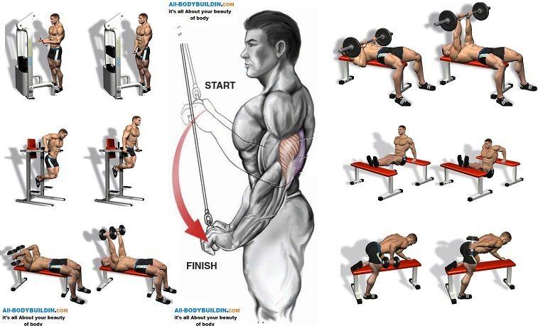 Building Massive Triceps