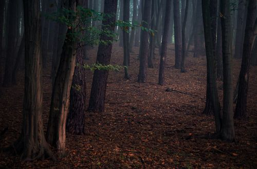 Autumn in the forest by Mirek Grobelski