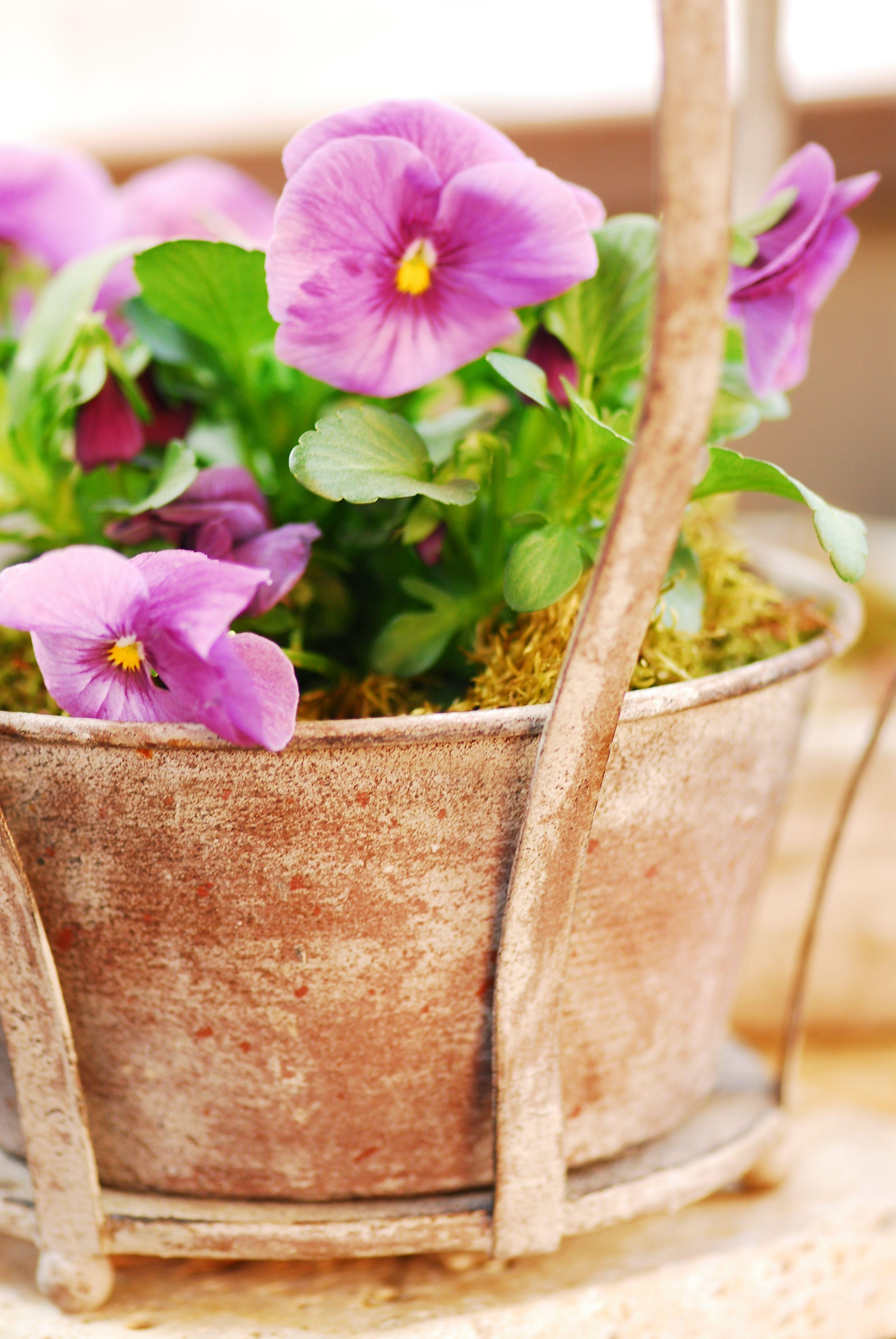 Garten Pflanzen Frühling Dekoration Shabby Chic & Vintage Lebensart