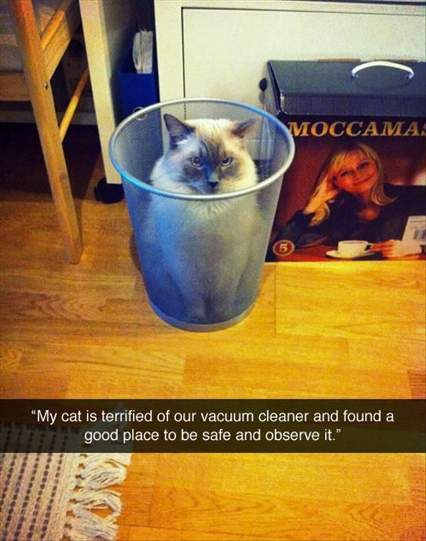 Cat scared of vacuum cleaner lol | Cute funny animals, Funny