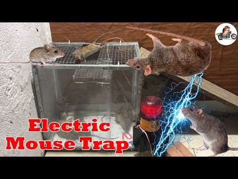 Best Electric Rat Trap Electric Mouse Rat Trap Work With Battery 12v Homemade Electric Mouse Trap Youtube Limpieza Trucos