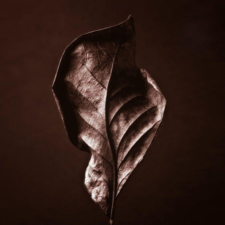 brown leaf - Second Base (Bronze)