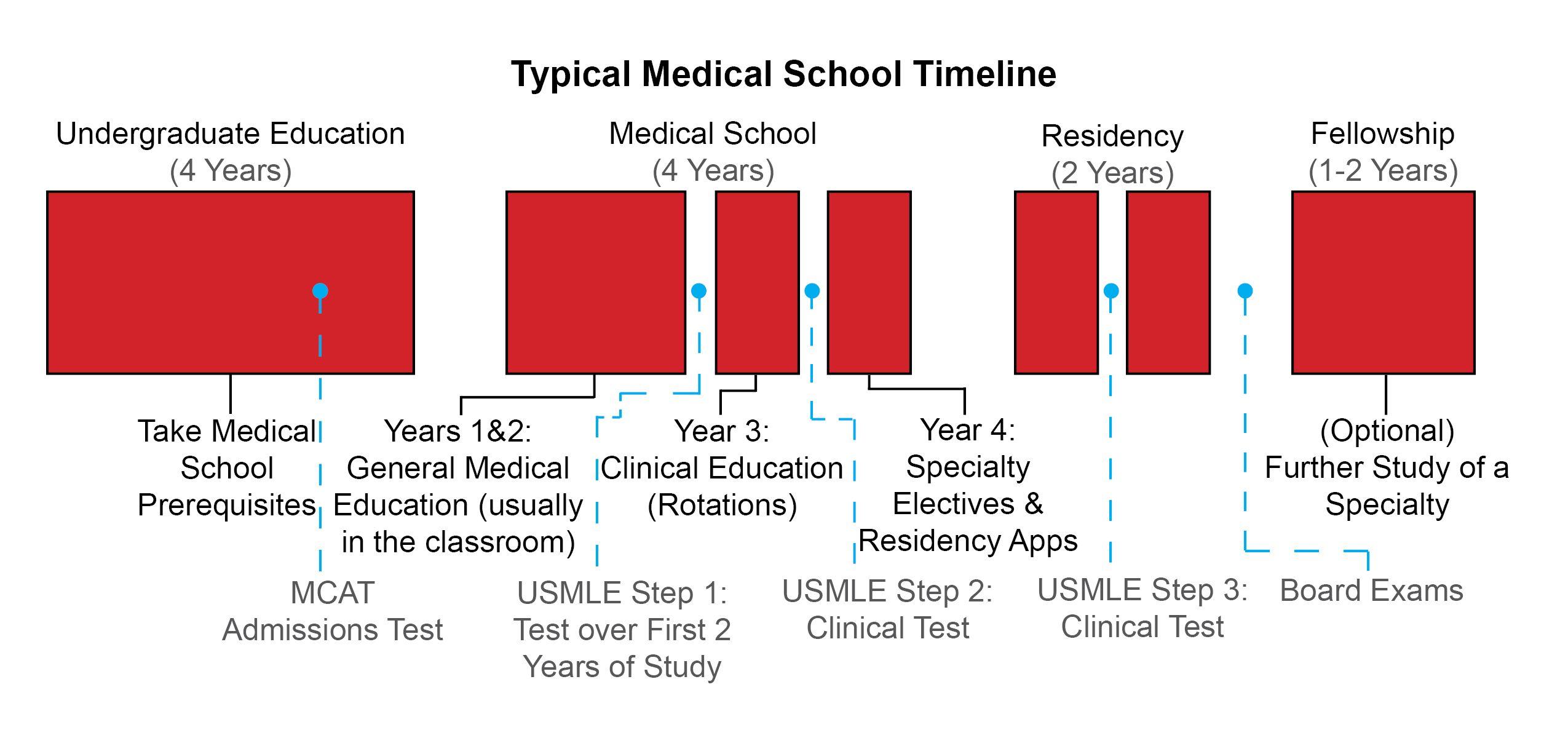medical school timeline | Med School Timeline | science