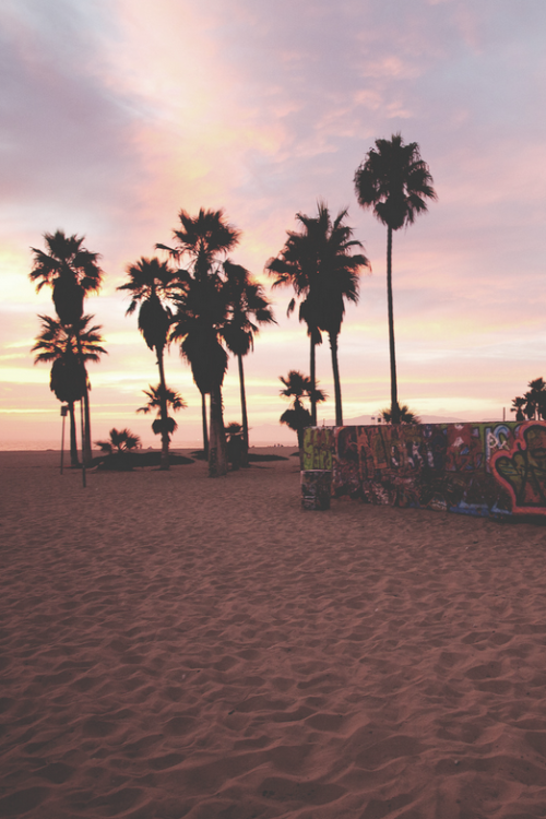 palm trees tumblr vertical. Palm Trees, Sunset, The Beach, And Graffiti Trees Tumblr Vertical