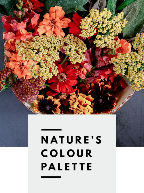 BoTANICAL FoLK — THREAD natural dyes colour palette