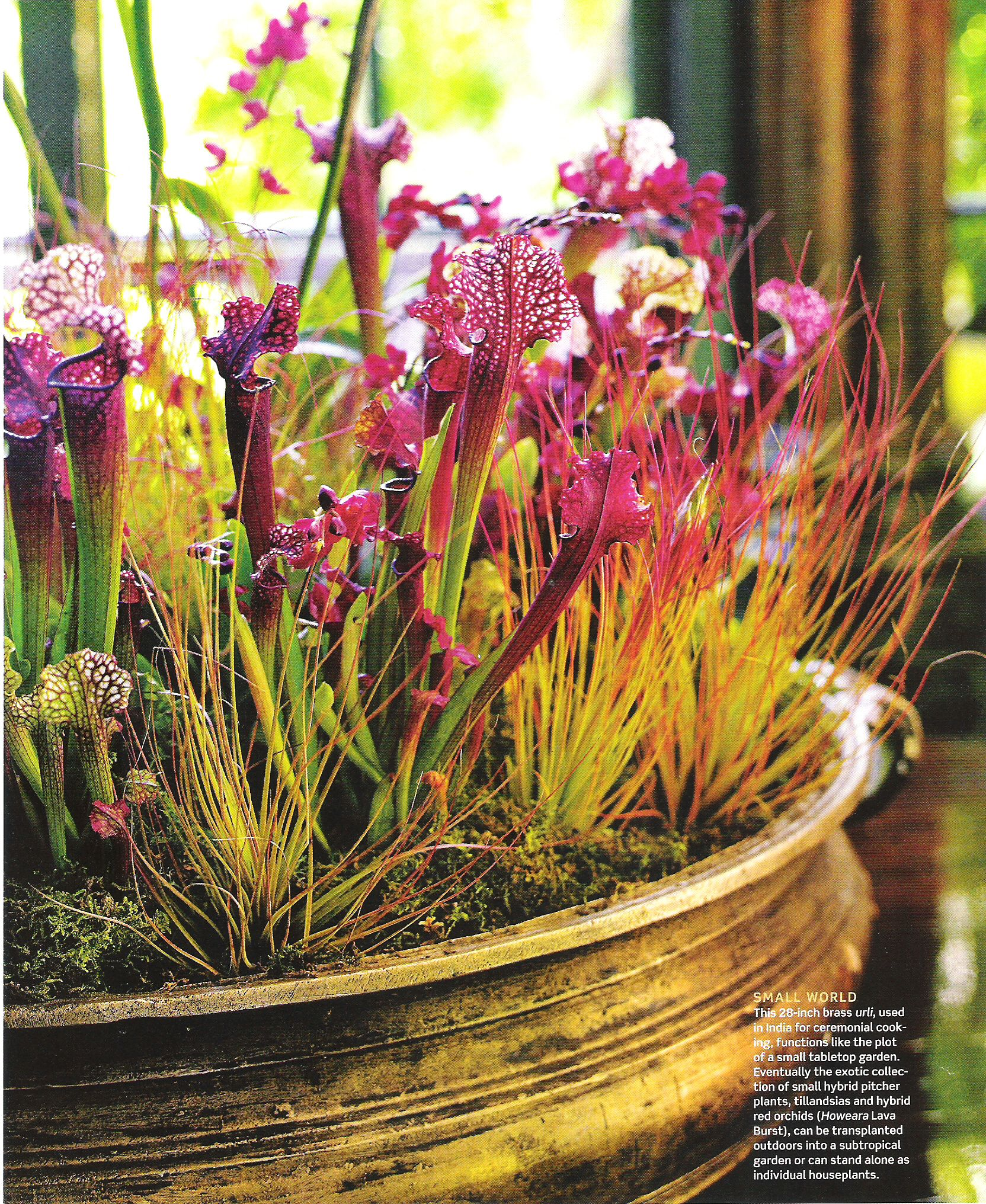 35 Advantageous Small Vegetable Garden Ideas For Your: Tabletop Garden Of Orchids, Tillandsia And Hybrid Pitcher