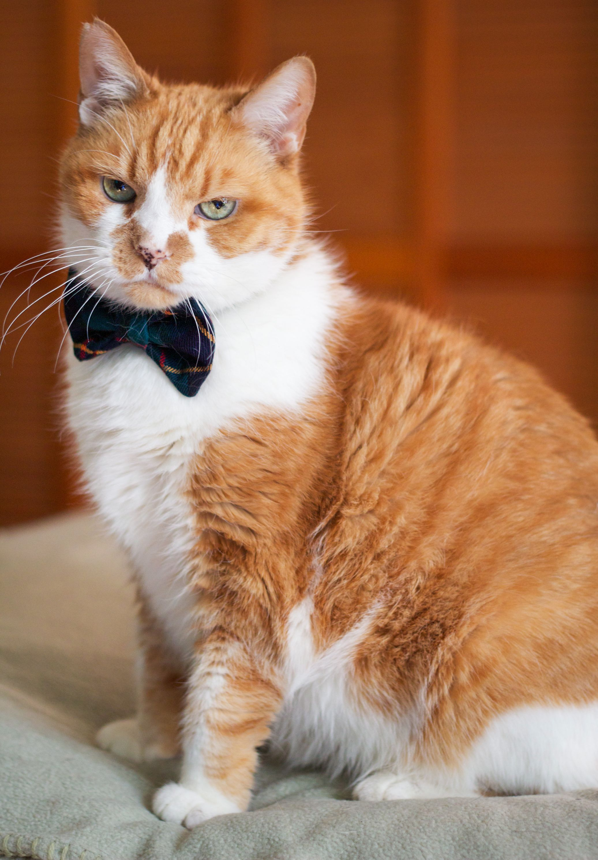 11 cats who loathe weddings and arent afraid to show it cat 11 cats who loathe weddings and arent afraid to show it junglespirit Images