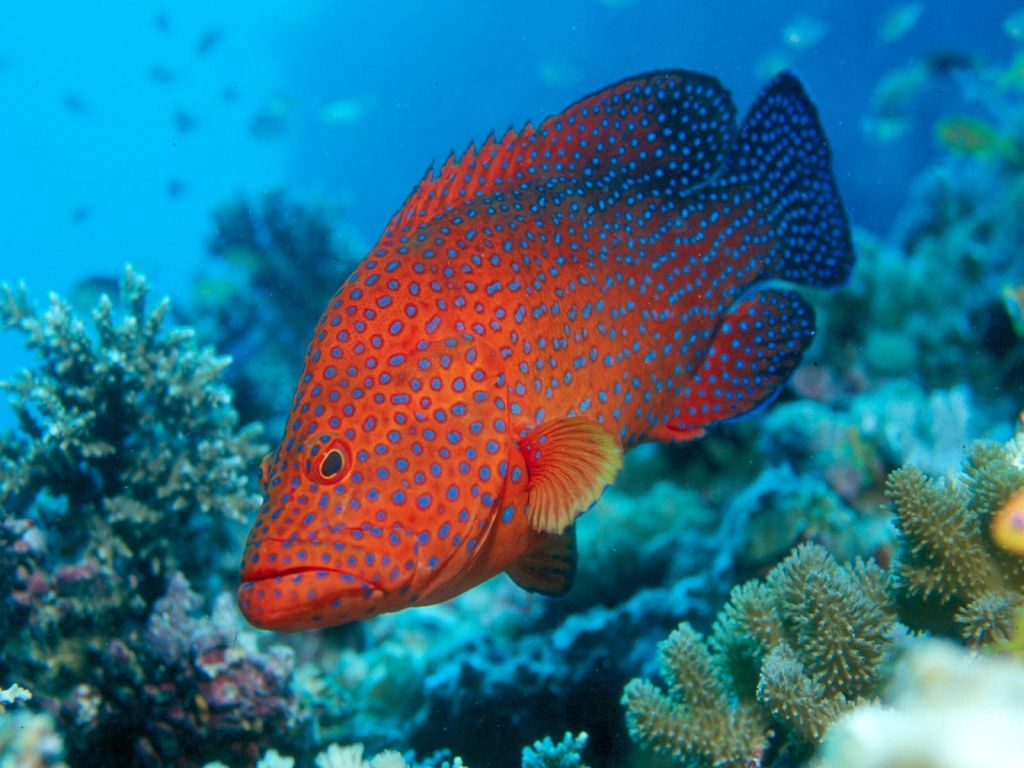 Top 27 Sea Animals Wallpapers In Hd: ปักพินโดย Aten Kawinporp ใน Animals : Sea Fish