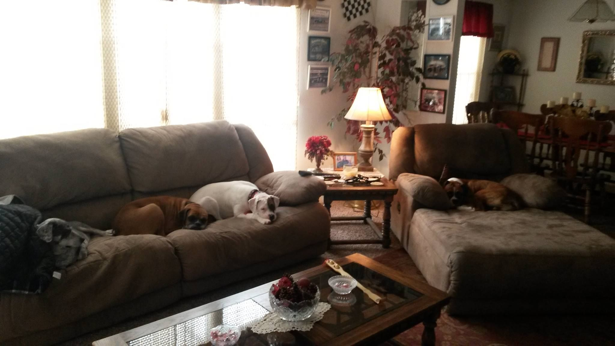 Lazy Bunch of dogs