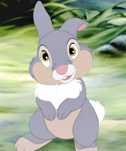 Thumper Now Here S A Little Guy Who S Not Only Cute But Smart