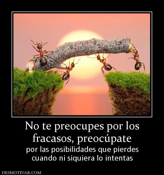 No+te+preocupes+por+los+fracasos,+preocúpate++por+las+posibilidades+que+pierdes+cuando+ni+siquiera+lo+intentas